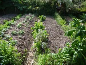 Potager, Jardins du Marais, Hoscas - Herbignac (44)