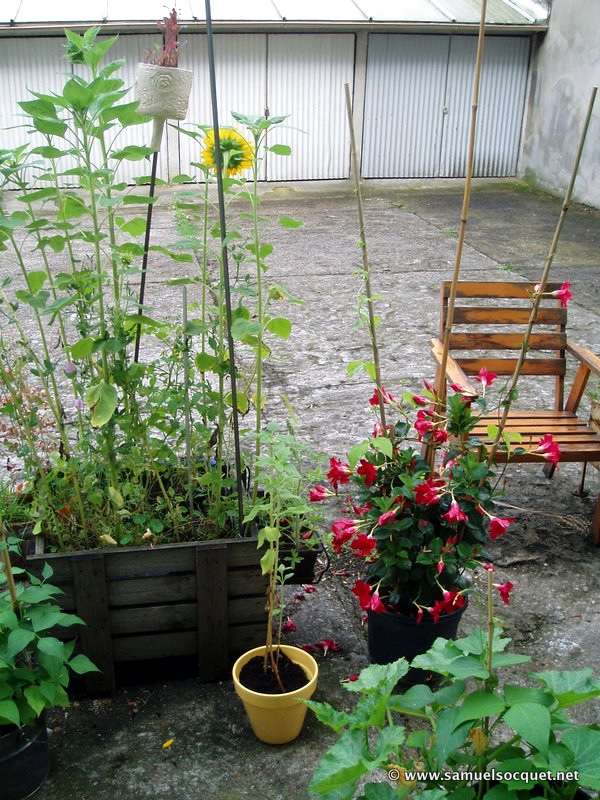 Les Jardins Partages De L Utopie Au Potager Samuel Socquet